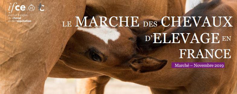 Le marché du cheval en France : qui sont les équidés achetés pour l'élevage ? - IFCE