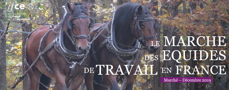 Note IFCE : Le marché du cheval en France : qui sont les équidés achetés pour le travail ?