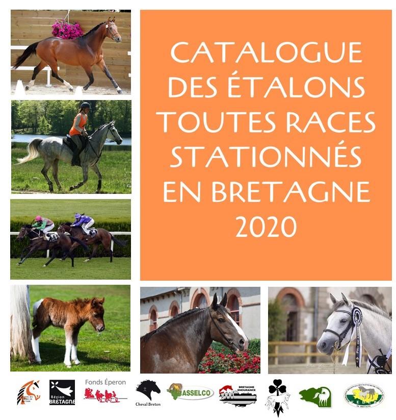 Le catalogue en ligne des étalons toutes races stationnés en Bretagne vient de paraître
