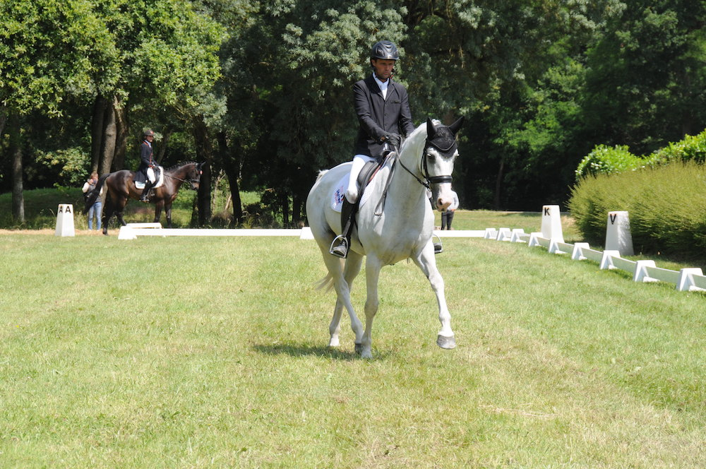 Ambiance feutrée pour la reprise des compétitions jeunes chevaux au Lion d'Angers