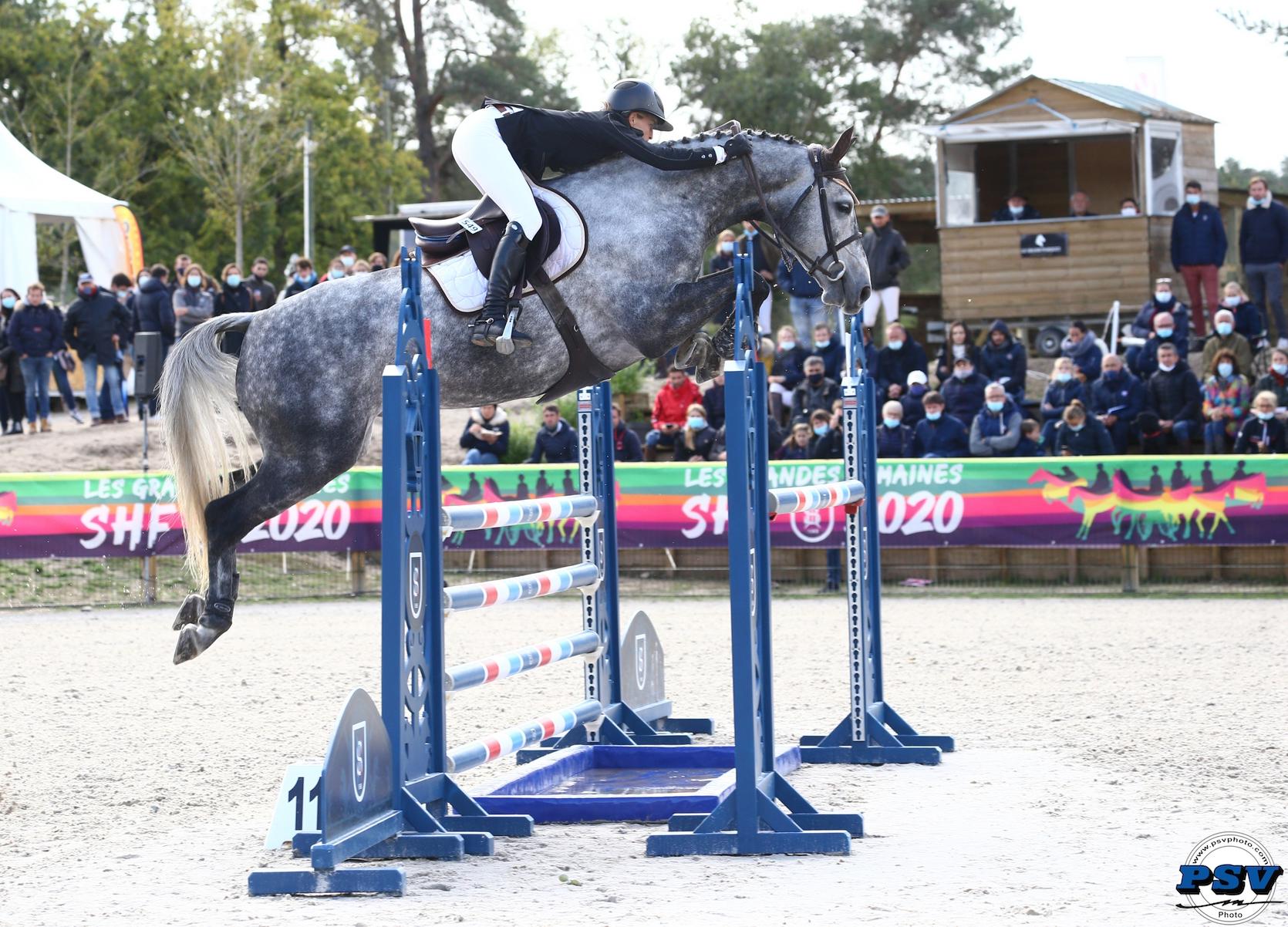 Equin Normand : GRANDE SEMAINE DE l'ELEVAGE UNE RAZZIA  NORMANDE