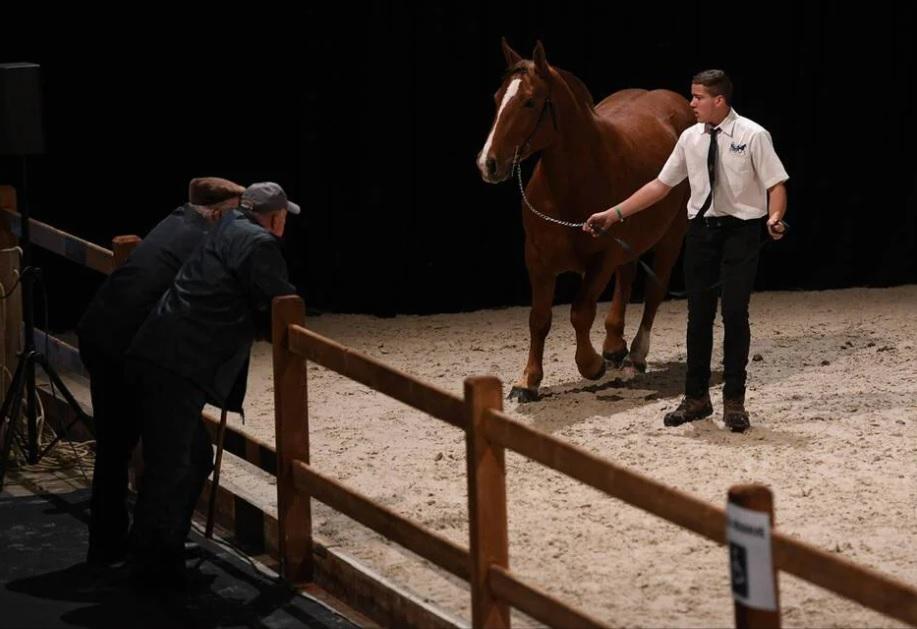 Angers. Le Salon du cheval se tiendra en novembre 2021