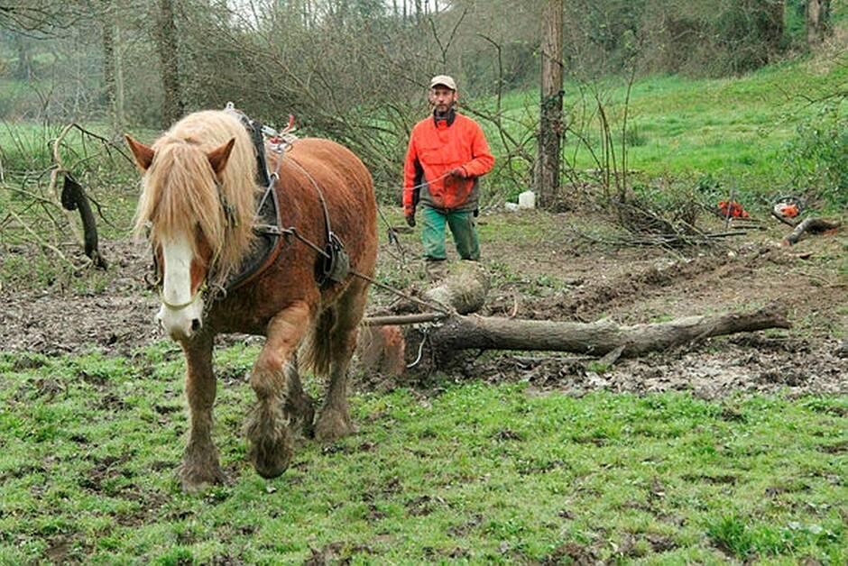 Vendée. Le cheval de trait ou « l'attraction » animale