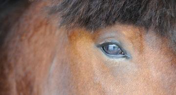 Le cheval : un atout pour le monde d'après en France et en Europe