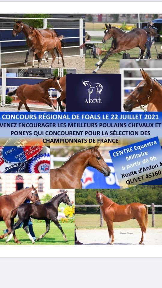 Des élevages de qualité en région remportent les deux premiers prix de la finale foals SF à St Lô