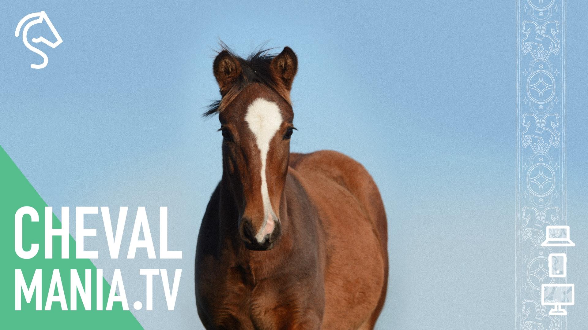 ChevalMania.tv, une nouvelle plateforme très engagée