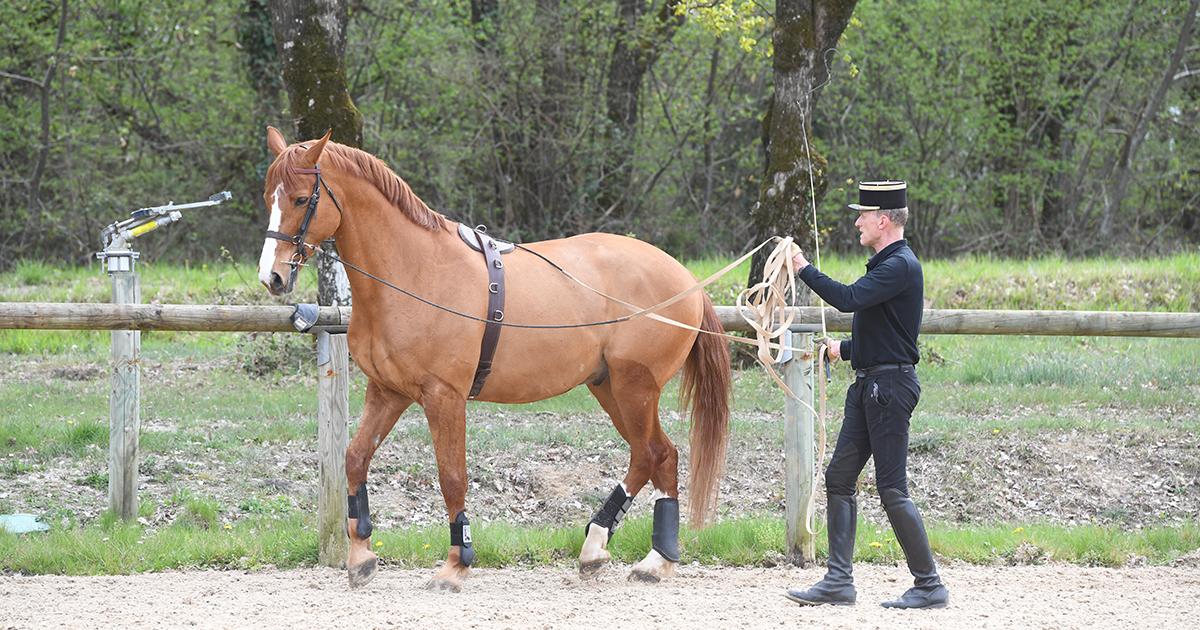 Apprentissage et cheval : renforcer liens et confiance
