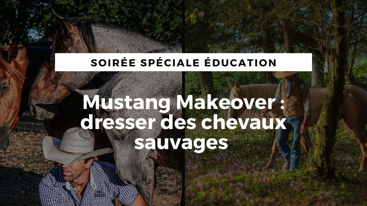 LIVE :  Mustang Makeover, dresser des chevaux sauvages