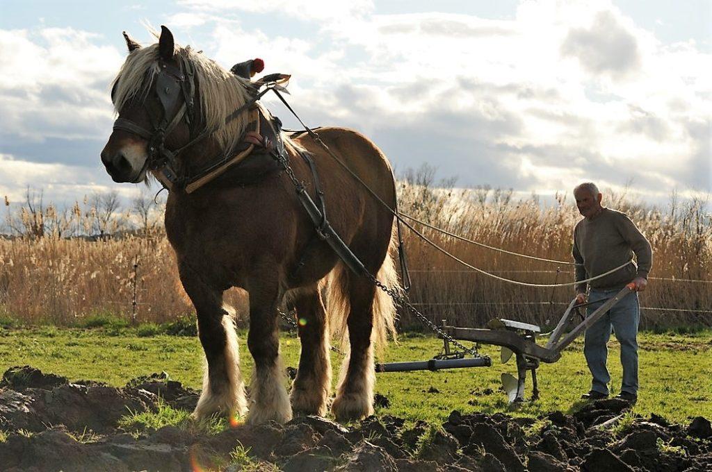 La Roche-sur-Yon : cultiver sa terre avec un cheval