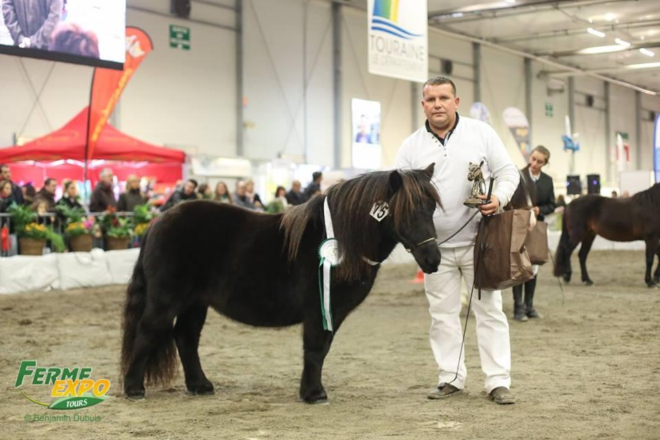 Concours inter race poneys Ferme Expo Tours