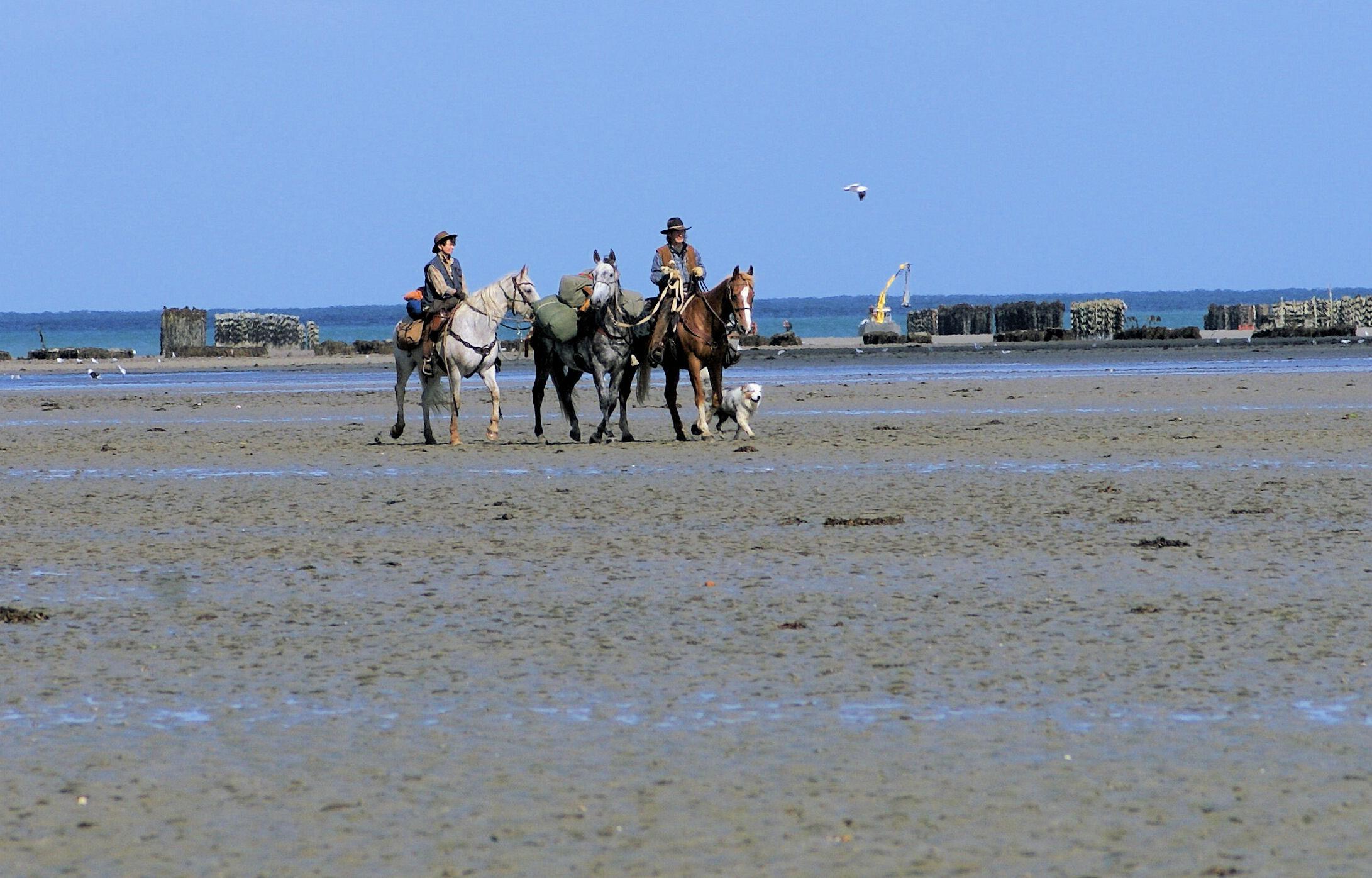 Lettre du Tourisme Equestre en Bretagne