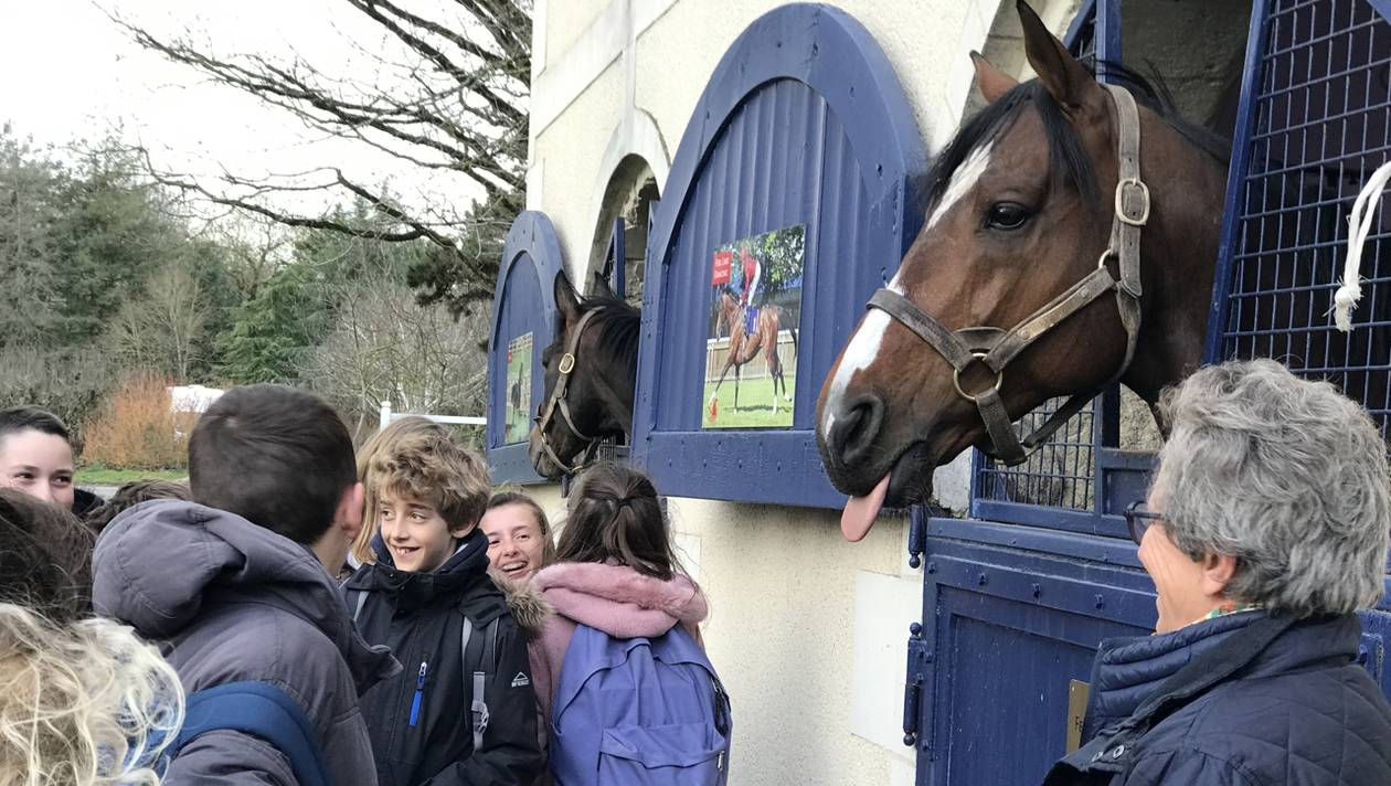 200 collégiens à la rencontre du monde équestre, près d'Angers