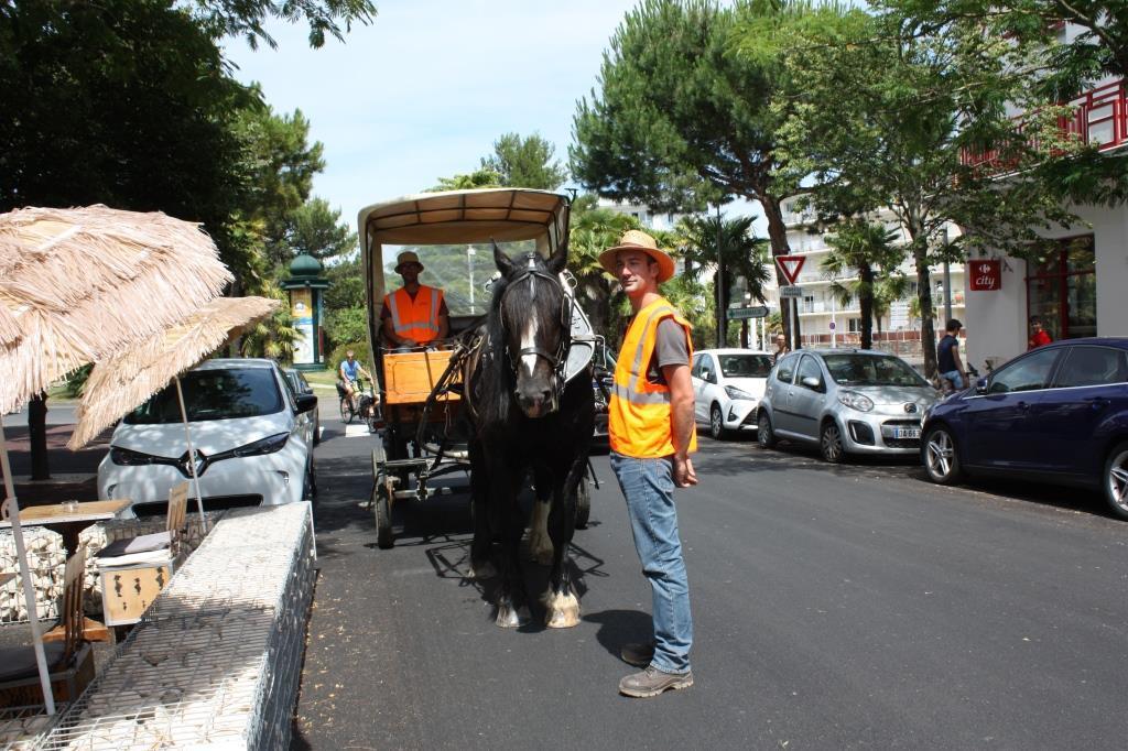 Insolite : à La Baule, les cartons des commerçants ramassés avec un cheval