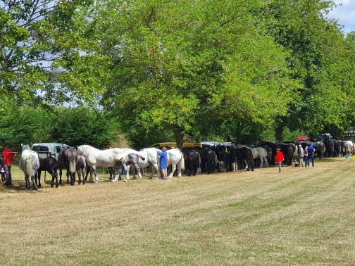 1er concours local Modèle et Allures pour les éleveurs de chevaux de traits du Berry