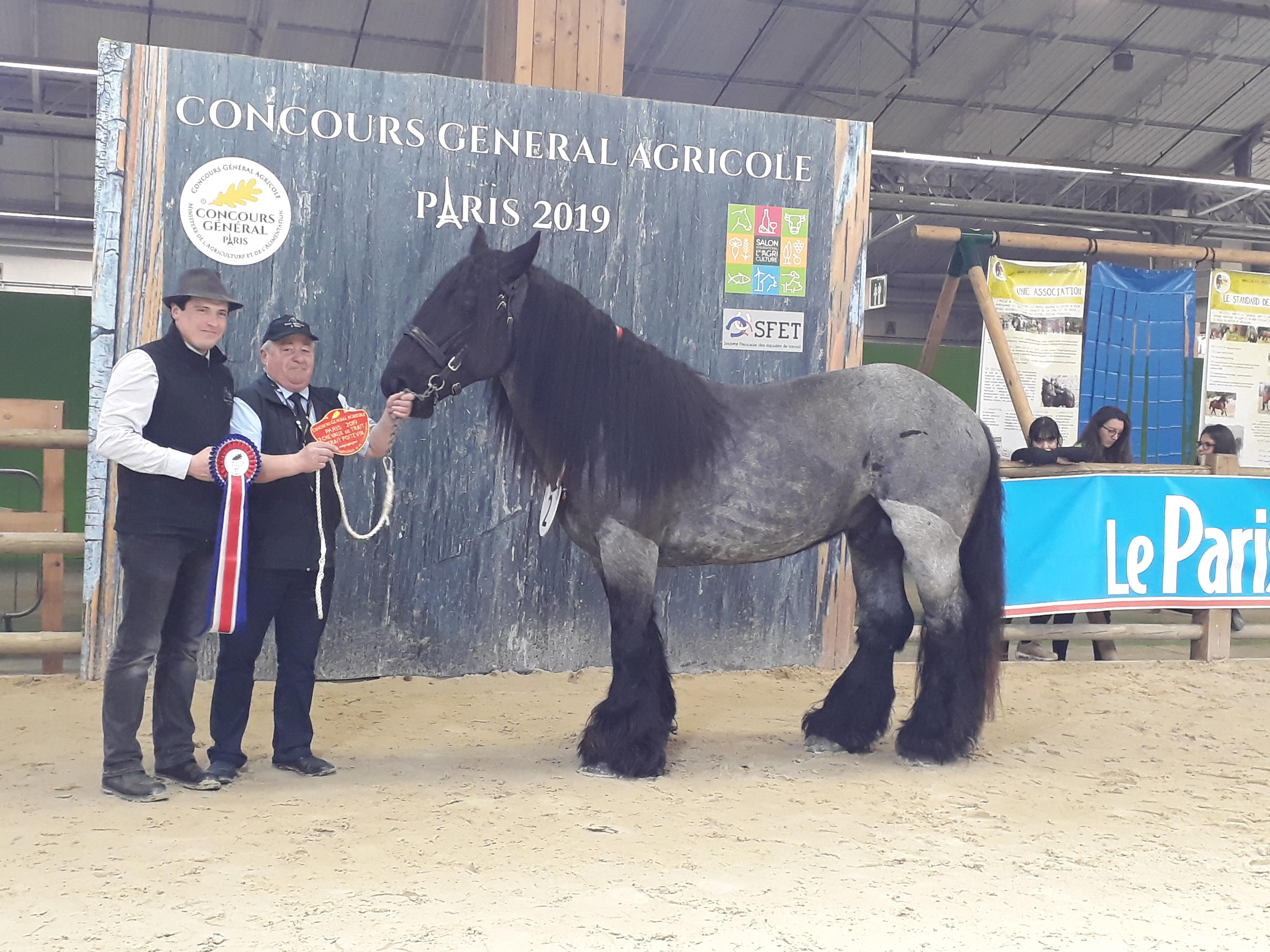Falco Richardiere est le gagnant du Concours général agricole des étalons Poitevins mulassiers