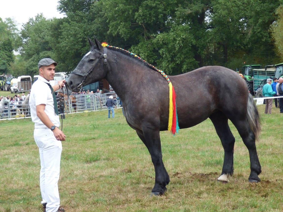 Concours modèle et allures local chevaux de Trait à Chateaumeillant
