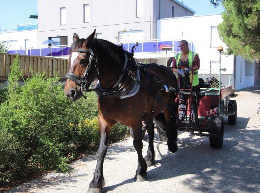 Saint-Gilles-Croix-de-Vie : lorsque le cheval remplace le polluant camion à ordures